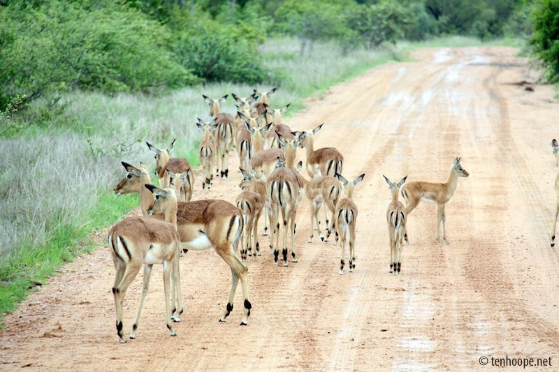 Animals on the road in Africa - Overland travel