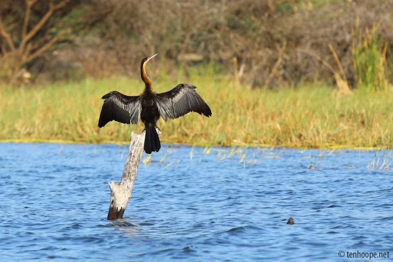 Overland Travel in Africa - Bird