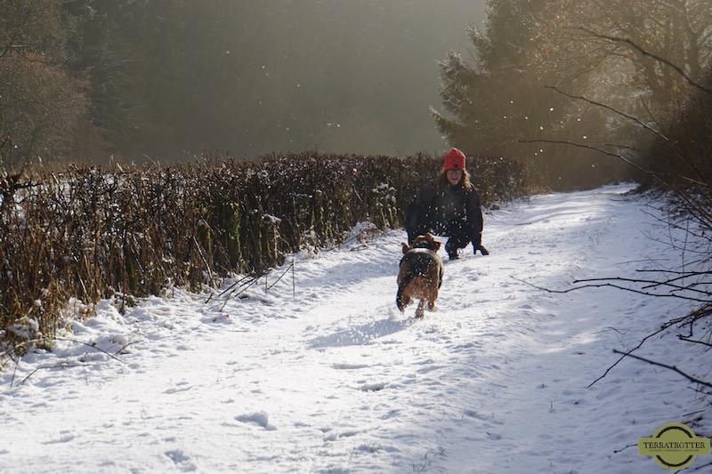Basset dog running in the snow